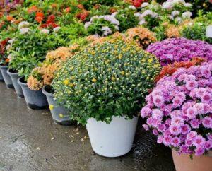 Articoli da giardinaggio emporio agricolo bergonzi for Articoli giardinaggio